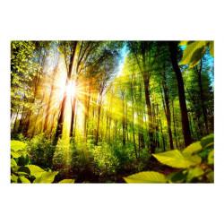 Fototapet - Forest Hideout