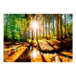 Fototapet - Marvelous Forest
