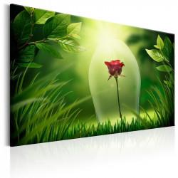 Billede - Magical Rose