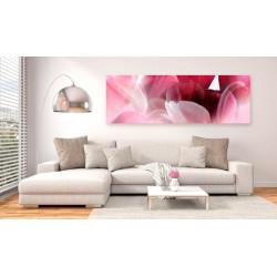 Billede - Flowers: Pink Tulips
