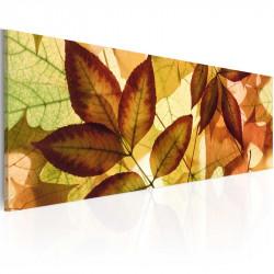 Billede - collage - leaves