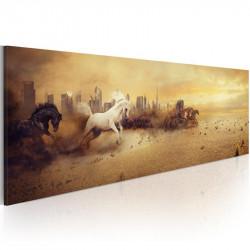 Billede - City of stallions