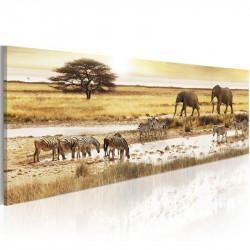 Billede - Africa: at the...