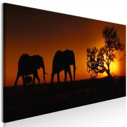 Billede - Elephant Family...