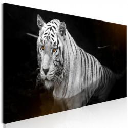 Billede - Shining Tiger (1...
