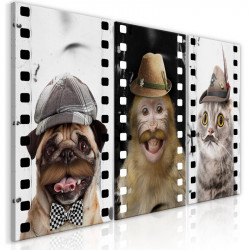 Billede - Funny Pets...