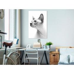 Billede - Hairless Cat (1...