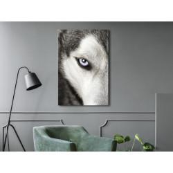 Billede - Dog's Look (1...