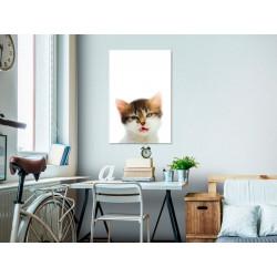 Billede - Vexed Cat (1...