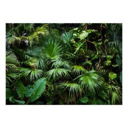 Fototapet - Sunny Jungle