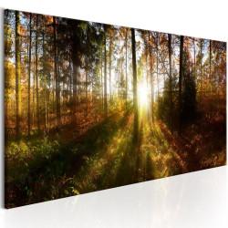 Billede - Beautiful Forest