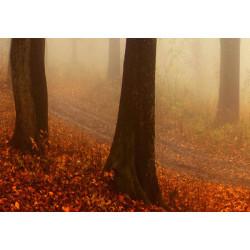 Billede - Morning Fog