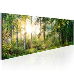 Billede - Forest Shelter