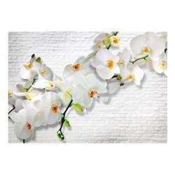 Fototapet - The Urban Orchid