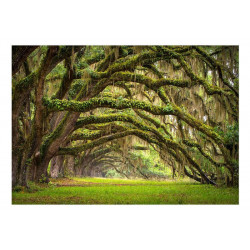 Fototapet - Tree embrace
