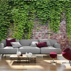 Fototapet - Brick and ivy