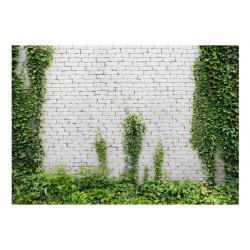 Fototapet - Creeping ivy