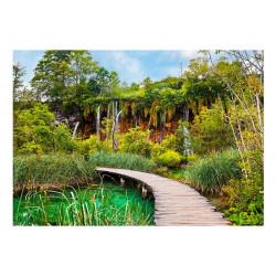 Fototapet - Green oasis