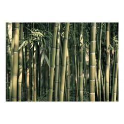 Fototapet - Bamboo Exotic