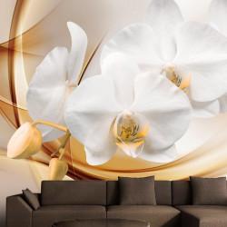 Fototapet - Orchid blossom