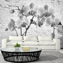Fototapet - Orchid in...