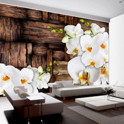 Fototapet - Blooming orchids