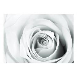 Fototapet - Rose charade