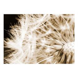 Fototapet - Dandelion - sepia
