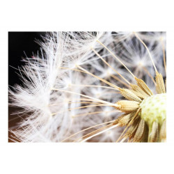 Fototapet - Fluffy dandelion