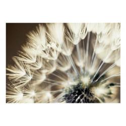 Fototapet - Beautiful...