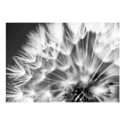 Fototapet - Dandelion: Kiss...