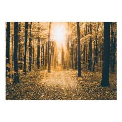 Fototapet - Magical Light